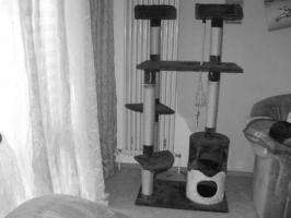 Grossen Katzen Kratzbaum in Braun und besche
