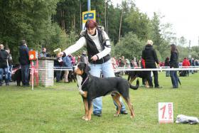 Foto 2 Grosser Schweizer Sennenhund Deckrüde