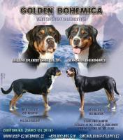 Grosser Schweizer Sennenhund - FCI Stammbaum