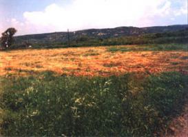 Grosses Grundstück am Fluss/Griechenland