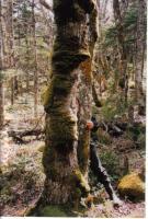 Foto 4 Großes Grundstück in Kanada zu verkaufen oder Tausch mit Preisausgleich.
