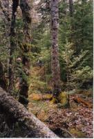 Foto 5 Großes Grundstück in Kanada zu verkaufen oder Tausch mit Preisausgleich.
