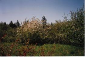 Foto 6 Großes Grundstück in Kanada zu verkaufen oder Tausch mit Preisausgleich.