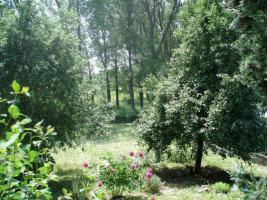 Foto 3 Grosses Grundstück mit altem Haus € 60000, --