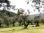 Grosses Grundstueck nahe Porto Heli/Griechenland