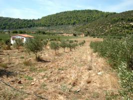 Grosses Grundstück nahe Traganas/Griechenland