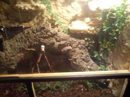 Foto 2 Großes Terrarium mit Boa Constrictor und Zubehör günstig abzugeben