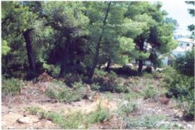 Foto 2 Grundstück auf der Insel Alonissos/Griechenland
