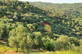 Foto 2 Grundstück in Italien mit Baugenehmigung