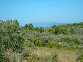Grundst�ck mit Meeresblick auf dem Pilion/Griechenland