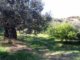 Foto 2 Grundstück mit Meeresblick nahe Galatas