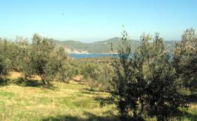 Grundstück mit Meeresblick nahe Galatas/Griechenland