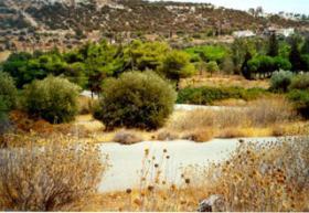 Foto 2 Grundstueck in Schinias auf Attika/Griechenland