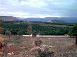 Grundstueck mit Weinanbau nahe Nauplia/Griechenland