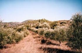 Grundstueck nahe Kyparissia/Griechenland