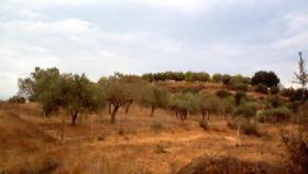 Foto 2 Grundstueck nahe Porto Heli/Griechenland