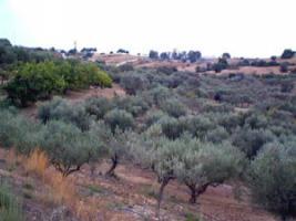 Foto 3 Grundstueck nahe Porto Heli/Griechenland