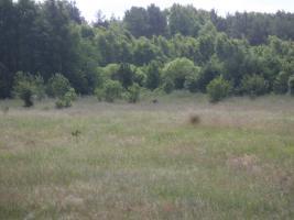 Foto 5 Grundstücksfläche von 1,83 ha in Jarosławiec