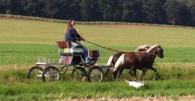 Gut gefahrenes Classic-Ponygespann