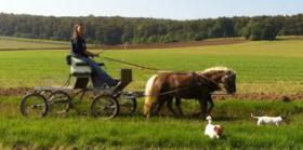 Foto 2 Gut gefahrenes Classic-Ponygespann