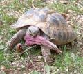 Guter Platz für Griechische Landschildkröten