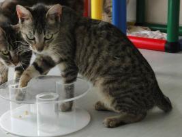 Foto 5 HARVEY geht im Tierheim unter :-(