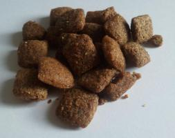 HH-Seminar: Blick in den Hundenapf - Ernährung des Hundes