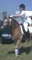 Foto 2 Haflinger Stute sportlicher Typ