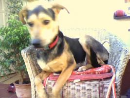 Foto 4 Hallo ich bin Chico !!!