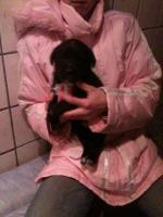 Foto 3 Hallo liebe Hundefreunde !!! Wir haben wieder s��e kleine Dalmatinermischlinge in liebevolle H�nde abzugeben.