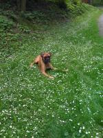 Foto 2 Hallo ihr lieben , mein name ist Charlie und ich suche eine Boxer o. Englisch Bulldog Dame