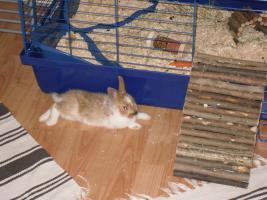 Foto 2 Hallo, ich heiße Charly...