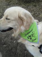 Halstuch für Hunde mit Rollwagen