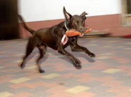 Harmonischen Umgang mit Ihrem Hund
