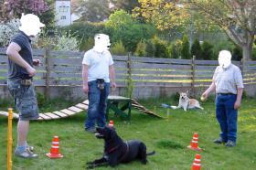 Foto 3 Harmonischen Umgang mit Ihrem Hund