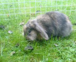 Foto 2 Hasen zu verschenken!!!