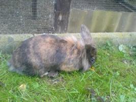 Foto 3 Hasen zu verschenken!!!