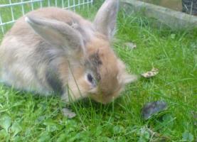 Foto 4 Hasen zu verschenken!!!