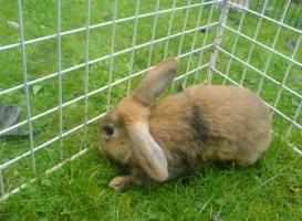 Foto 5 Hasen zu verschenken!!!