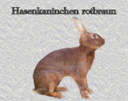 Foto 7 Hasenkaninchen und Deutsche Riesen weiß und grau