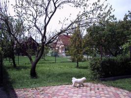 Foto 4 Haus am Balaton/Plattensee