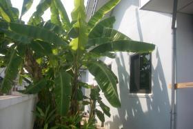 Foto 3 Haus mit Garten und Carport zu verkaufen