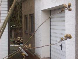 Foto 4 Haus mit Grundstück etwa 900m² mit Garage & Werkstadt Sanierungsbedürftig in 04552 Borna, Siedlung Kesselshain 01.