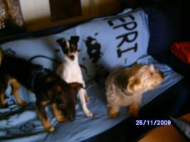 Haus zur Miete in Trier mit Haustierhaltung