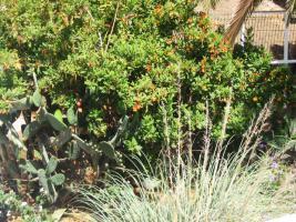 Foto 19 Haus Sonnenland - Gran Canaria zu verkaufen - Eckduplex mit Privatgarten