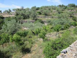 Foto 8 Haus mit einmaligem Ausblick auf das Ebro Delta
