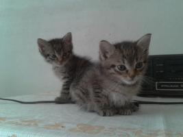 Hauskatzen in erfahrene Hände abzugeben!