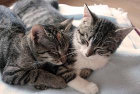 Hauskatzen zm Verlieben, weiblich, 5 Monate, abzugeben