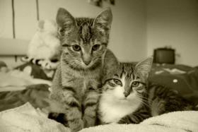 Foto 2 Hauskatzen zm Verlieben, weiblich, 5 Monate, abzugeben