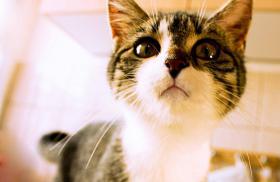 Foto 3 Hauskatzen zm Verlieben, weiblich, 5 Monate, abzugeben